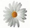 blomma_100