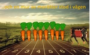 mur av morötter